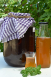 Kombucha Tea, Your new Probiotic Health Drink